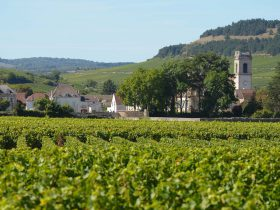 Lil's outstanding adventure to the Burgundy region (July 2nd – 11th)